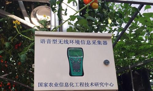 物联网操控系统嵌入展厅寿光蔬菜种植实现操作智能化