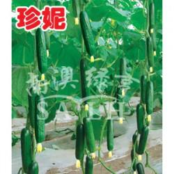 供应珍妮—黄瓜种子