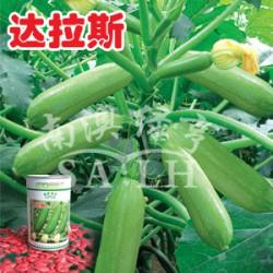 供应达拉斯—西葫芦种子