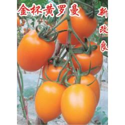 供应金杯黄罗曼—番茄种子