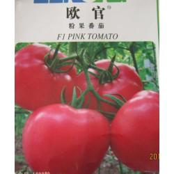 供应欧官—番茄种苗