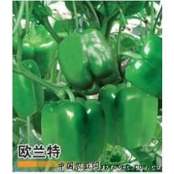 供应欧兰特—甜椒种子