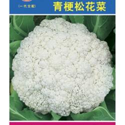 供应松花菜种子