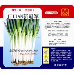 供应JT新冠军—大葱种子