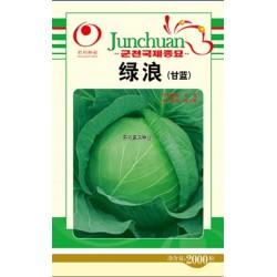 供应绿浪F1-杂交甘蓝种子