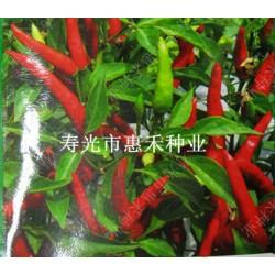 供应亚单----辣椒种子