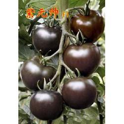 求购紫元帅黑番茄