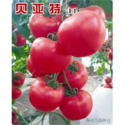 供应贝亚特—番茄种子