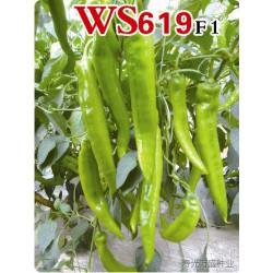 供应WS619—辣椒种子