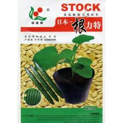供应日本根力特-砧木种子