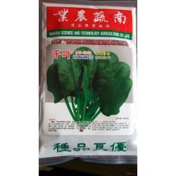 供应千叶抗病菠菜—菠菜种子