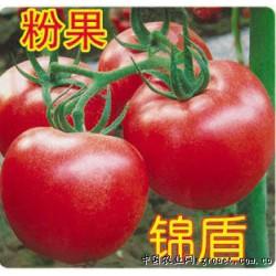 供应锦盾—番茄种子