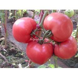 供应宝石达—番茄种子
