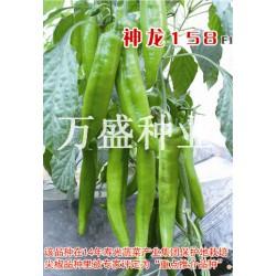 供应神龙158-辣椒种子