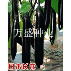 供应日本长龙--茄子种子