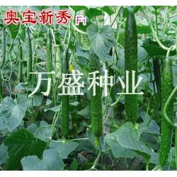 供应奥宝新秀-黄瓜种子