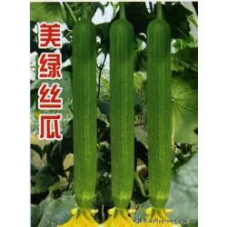 供应美绿丝瓜—丝瓜种子