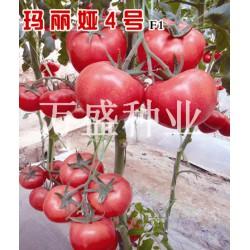 供应玛丽娅4号(抗TY)—番茄种子