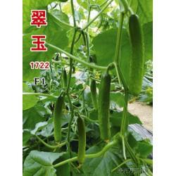 供应翠玉1722旱黄瓜种子