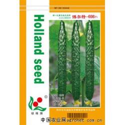 供应博尔特-698—黄瓜种子