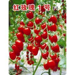 供应红玫瑰1号—番茄种子