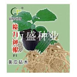 供应魔力神根-砧木种子