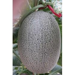 供应新红蜜17——甜瓜种子