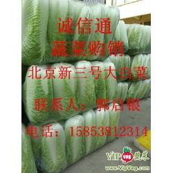 山东泰安肥城_北京新三号白菜大量供应中